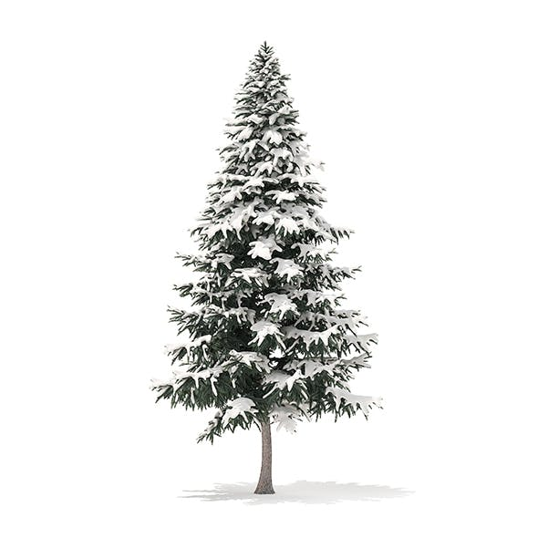 Spruce Tree with Snow 3D Model 7.8m