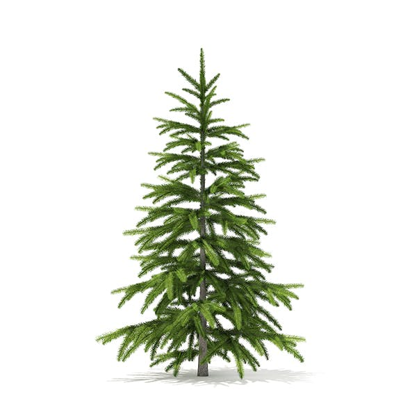 Fir Tree 3D Model 1.2m