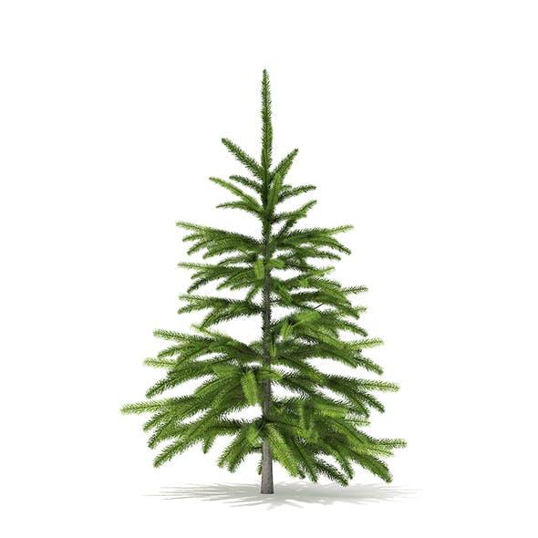 Fir Tree 3D Model 0.8m