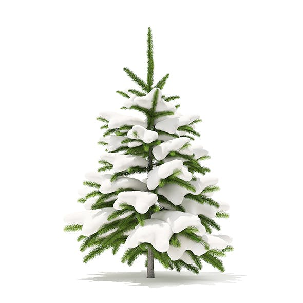 Fir Tree with Snow 3D Model 0.8m - 3DOcean Item for Sale