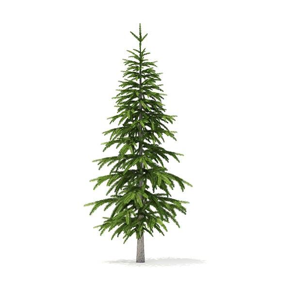 Fir Tree 3D Model 2.6m - 3DOcean Item for Sale