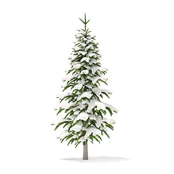 Fir Tree with Snow 3D Model 2.6m