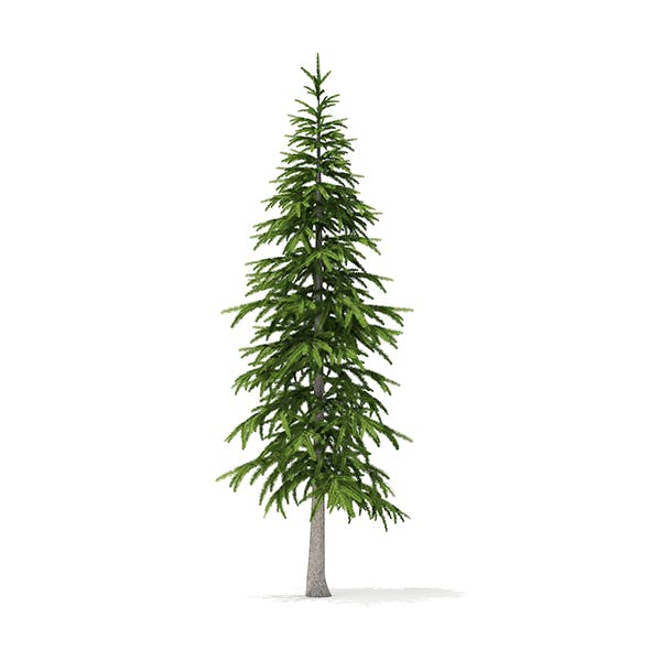 Fir Tree 3D Model 3.4m - 3DOcean Item for Sale