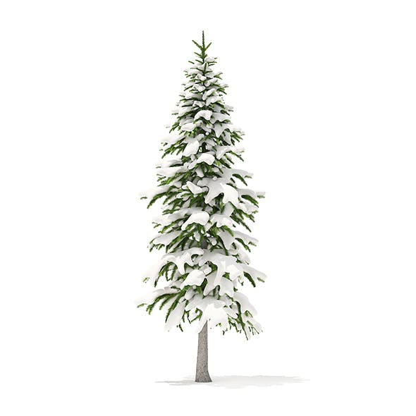 Fir Tree with Snow 3D Model 3.4m