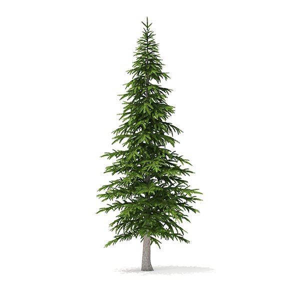 Fir Tree 3D Model 4.5m - 3DOcean Item for Sale