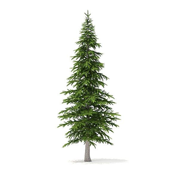 Fir Tree 3D Model 4.5m