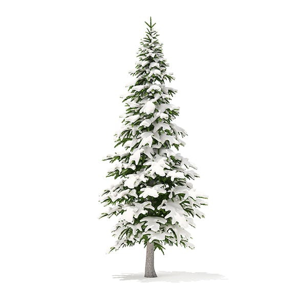 Fir Tree with Snow 3D Model 4.5m - 3DOcean Item for Sale
