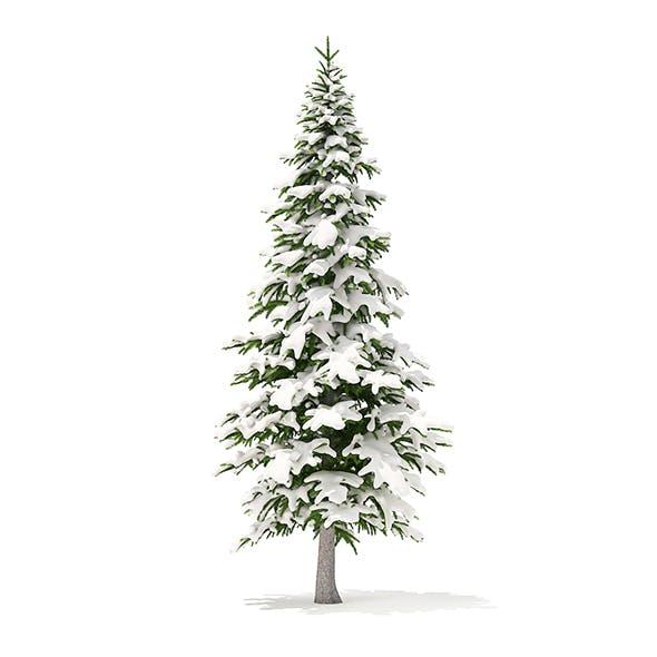 Fir Tree with Snow 3D Model 4.5m
