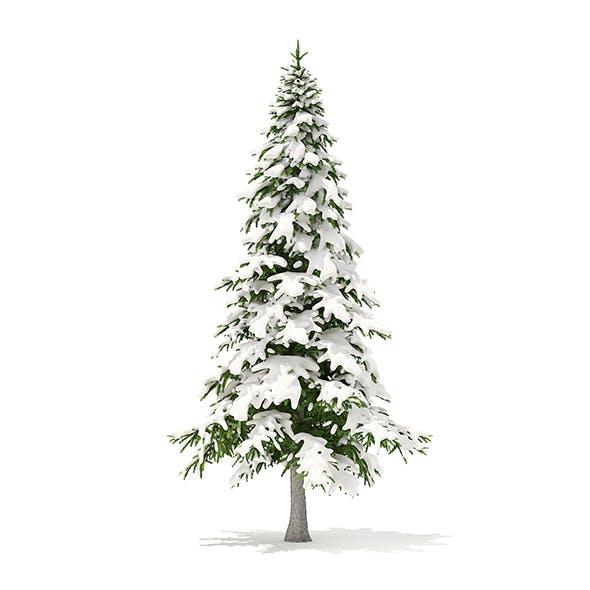 Fir Tree with Snow 3D Model 5.9m