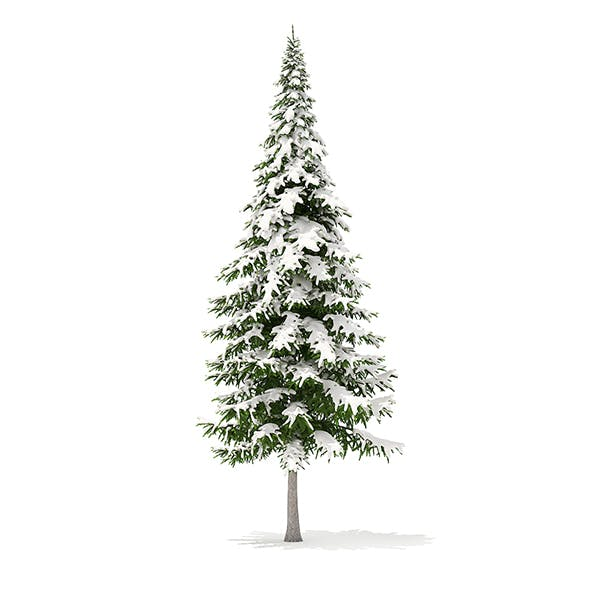 Fir Tree with Snow 3D Model 10m - 3DOcean Item for Sale