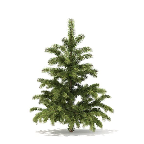 Pine Tree 3D Model 1.4m - 3DOcean Item for Sale