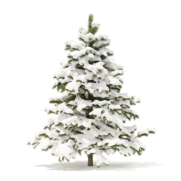 Pine Tree with Snow 3D Model 2.3m