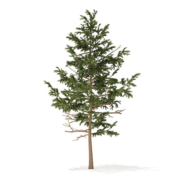 Pine Tree 3D Model 5.1m - 3DOcean Item for Sale