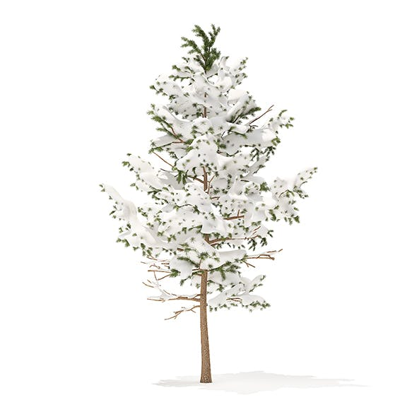 Pine Tree with Snow 3D Model 5.1m - 3DOcean Item for Sale