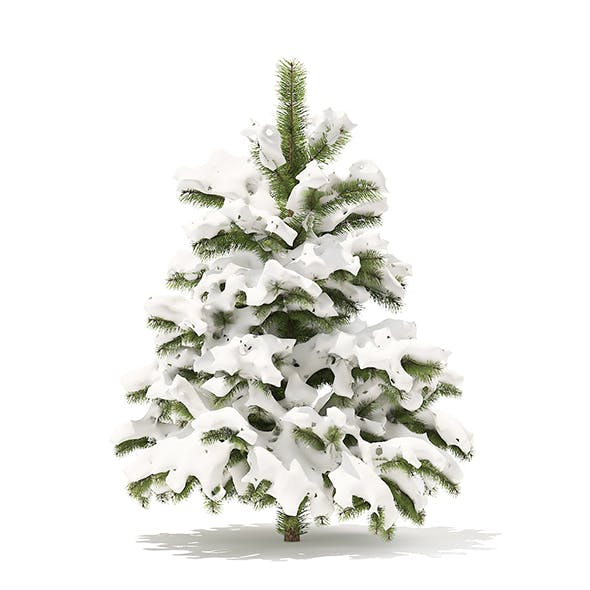 Pine Tree with Snow 3D Model 1.4m - 3DOcean Item for Sale