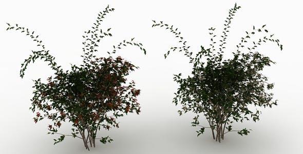 Wild Rose Bush - 3DOcean Item for Sale