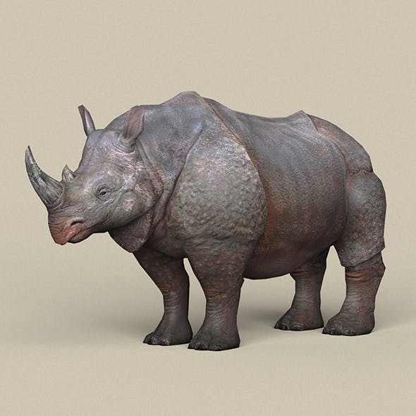 Game Ready Rhinoceros - 3DOcean Item for Sale