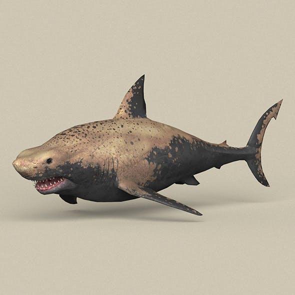 Game Ready Shark