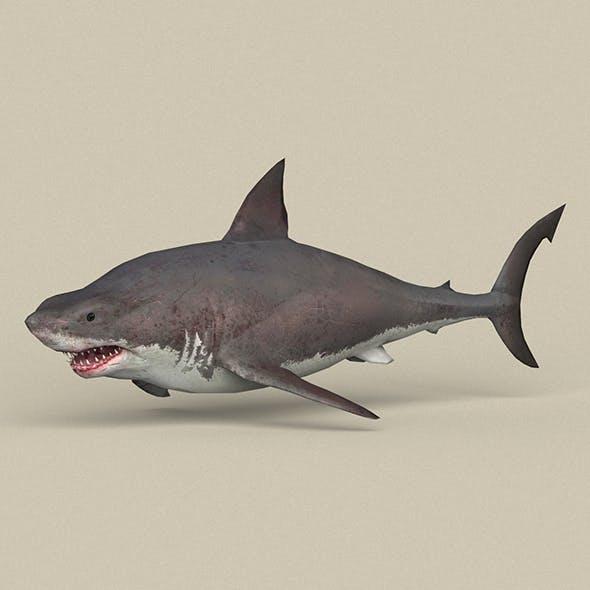 Game Ready White Shark - 3DOcean Item for Sale