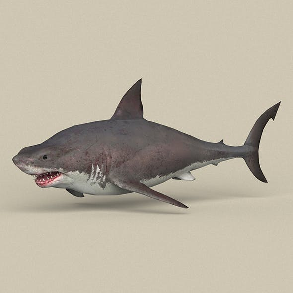 Game Ready White Shark
