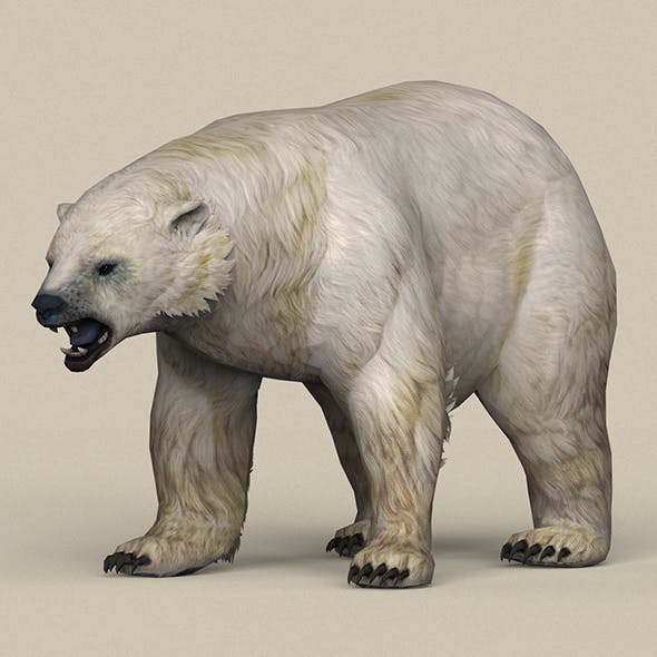 Game Ready Polar Bear - 3DOcean Item for Sale