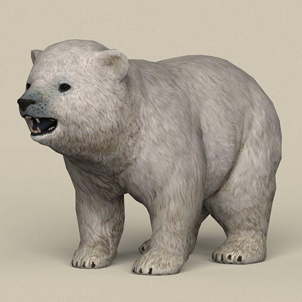 Game Ready Polar Bear Cub - 3DOcean Item for Sale