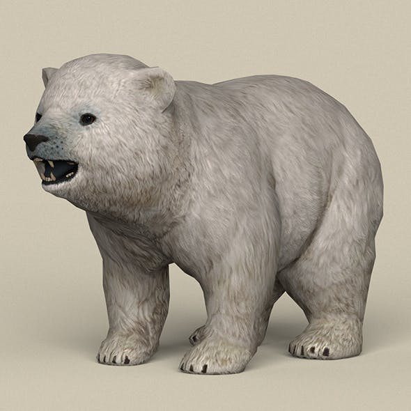 Game Ready Polar Bear Cub