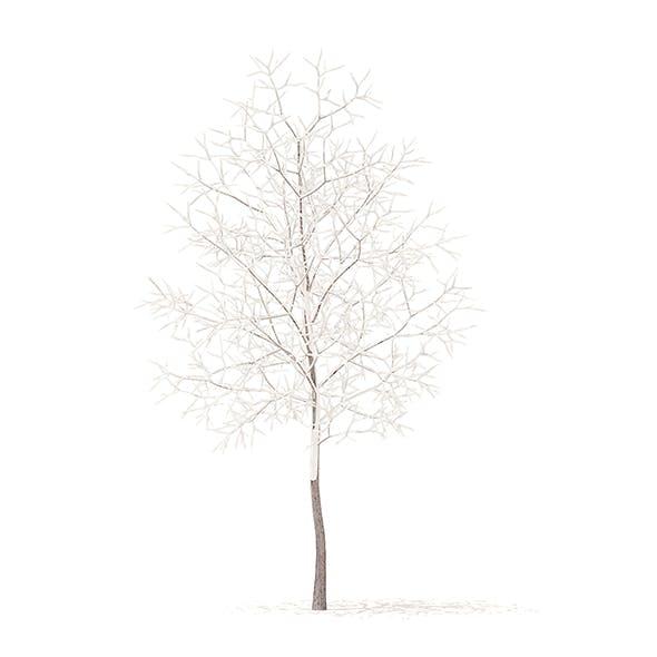 White Oak with Snow 3D Model 3.7m - 3DOcean Item for Sale