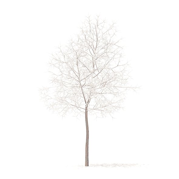 White Oak with Snow 3D Model 5.7m