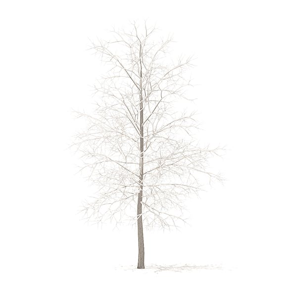 Sugar Maple with Snow 3D Model 4.2m - 3DOcean Item for Sale