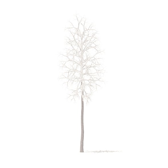 American Sweetgum with Snow 3D Model 2.3m
