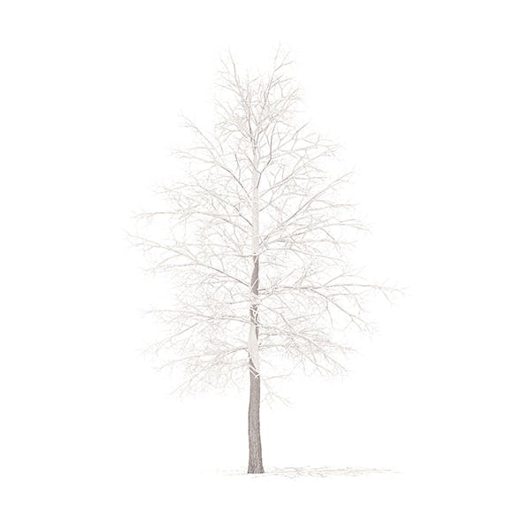American Sweetgum with Snow 3D Model 5.4m - 3DOcean Item for Sale