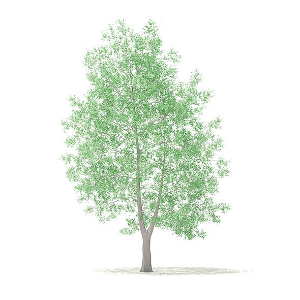 American Sweetgum 3D Model 9m - 3DOcean Item for Sale