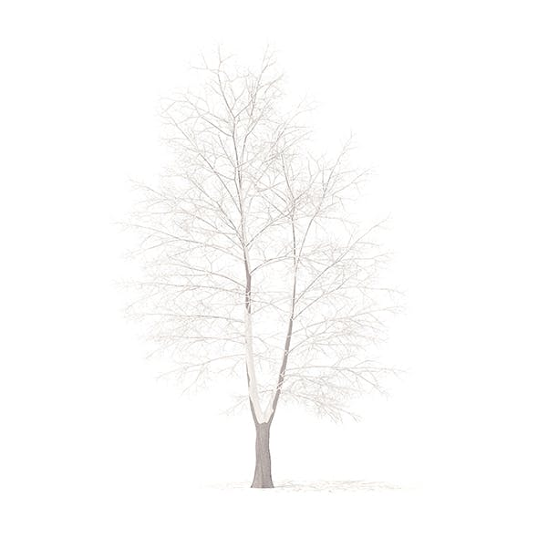 American Sweetgum with Snow 3D Model 9m - 3DOcean Item for Sale