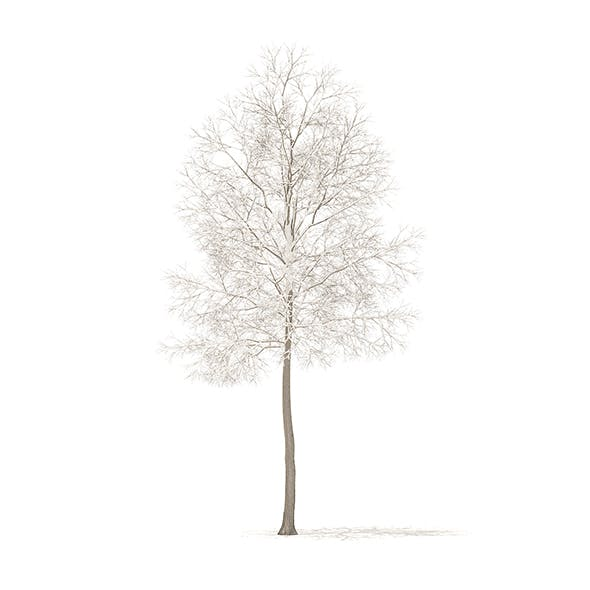 American Elm with Snow 3D Model 6.2m - 3DOcean Item for Sale