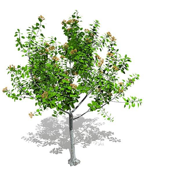 Tree 04 - 3DOcean Item for Sale