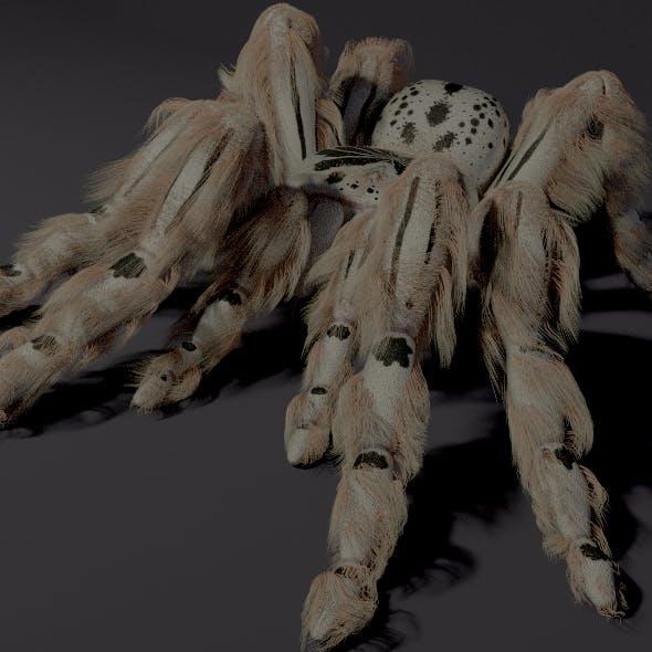 Evil white spider