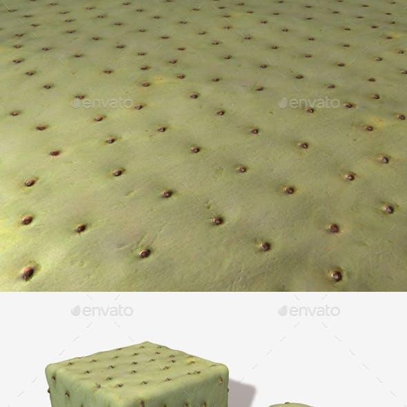 Green Cactus Seamless Texture