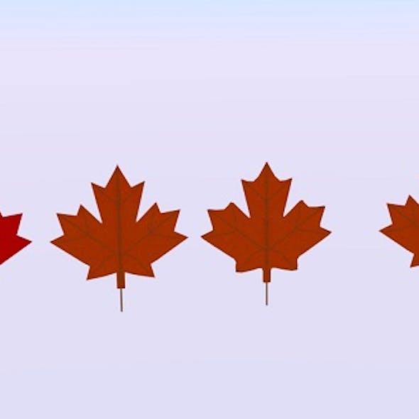 Maple Canada