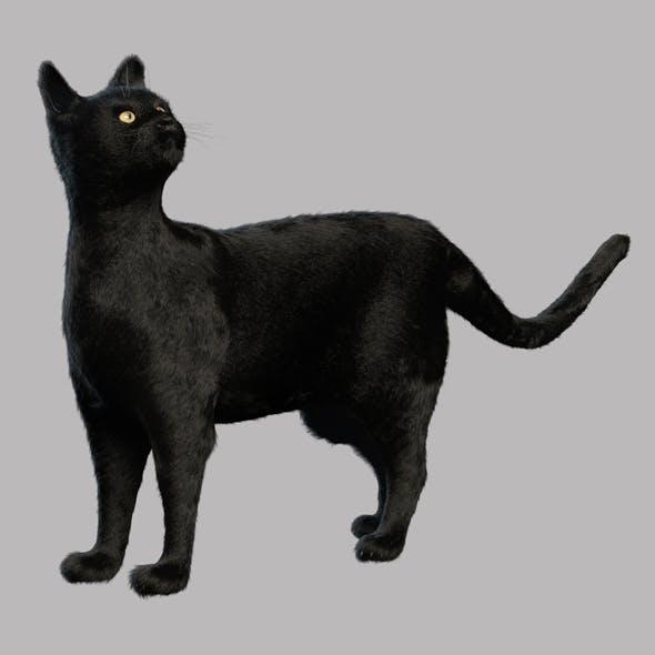 Black cat - 3DOcean Item for Sale
