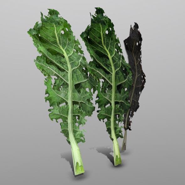Kale - 3DOcean Item for Sale