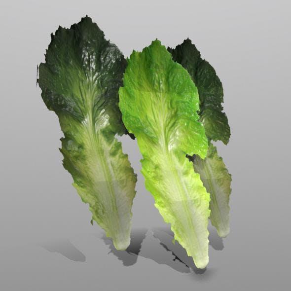 Lettuce Leaf - 3DOcean Item for Sale