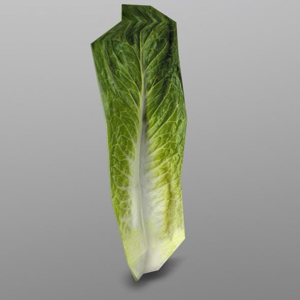 Roma Lettuce