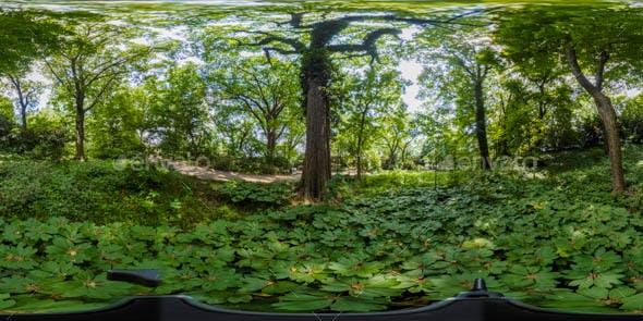 Realistic HDRI Image - Park, Flowers, & Plants - 3DOcean Item for Sale