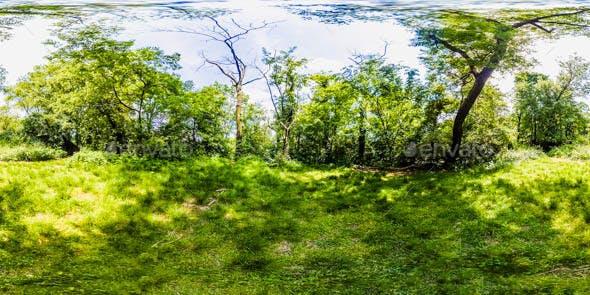 HDRI Exterior Environment Map: Forest Scene - 3DOcean Item for Sale