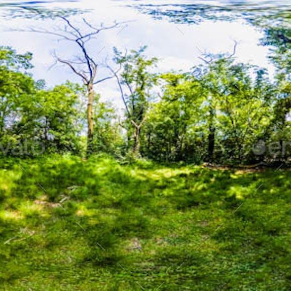 HDRI Exterior Environment Map: Forest Scene