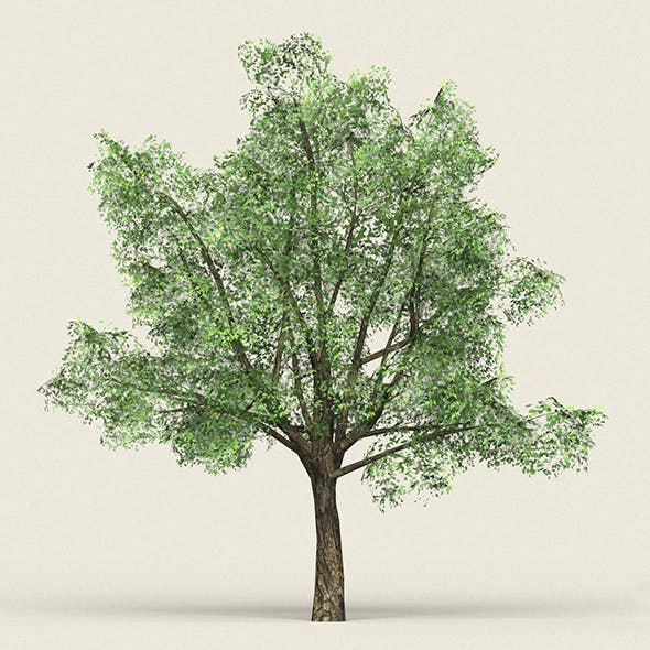 Game Ready Forest Tree 06 - 3DOcean Item for Sale