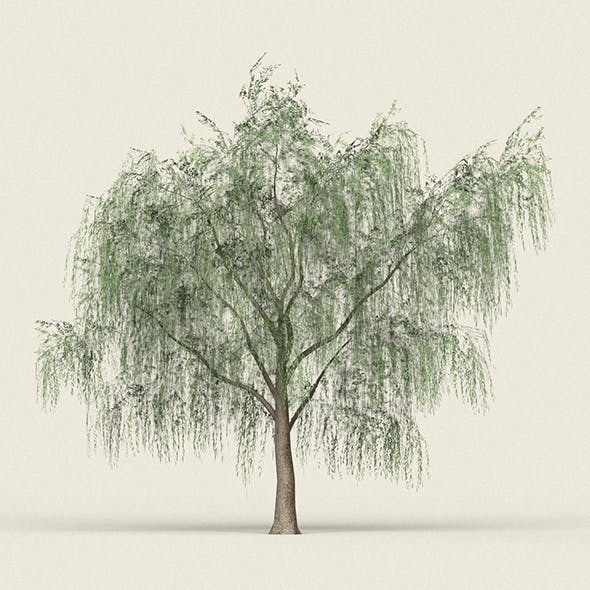 Game Ready Forest Tree 15 - 3DOcean Item for Sale