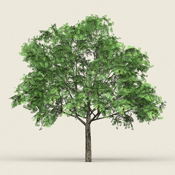 Game Ready Forest Tree 17 - 3DOcean Item for Sale