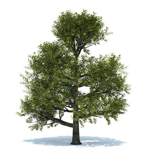 Oak tree - 3DOcean Item for Sale